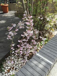 桜 接骨院 庭 浦和